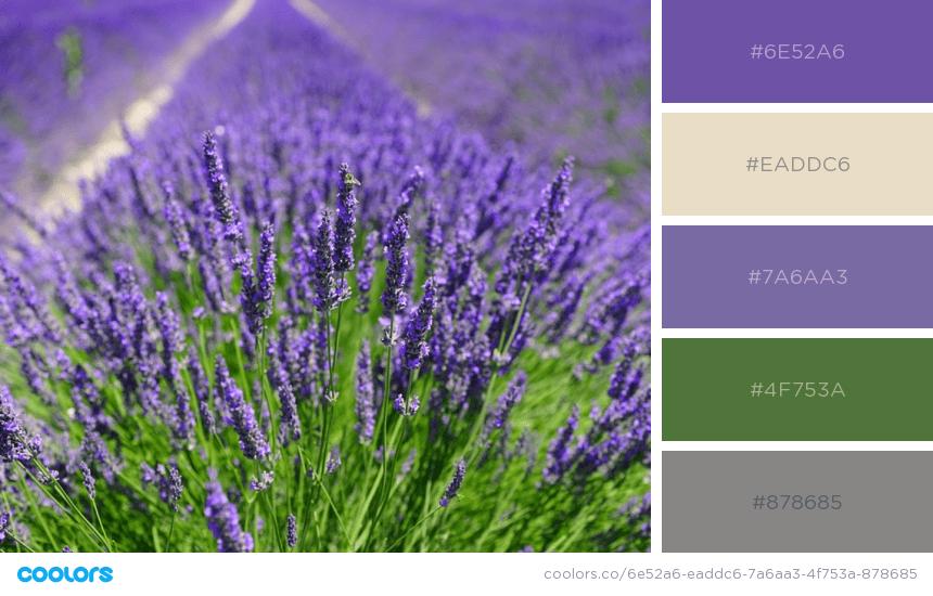 Lavender-field-photoshoot