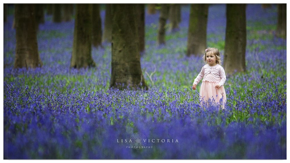 child in bluebells photograph
