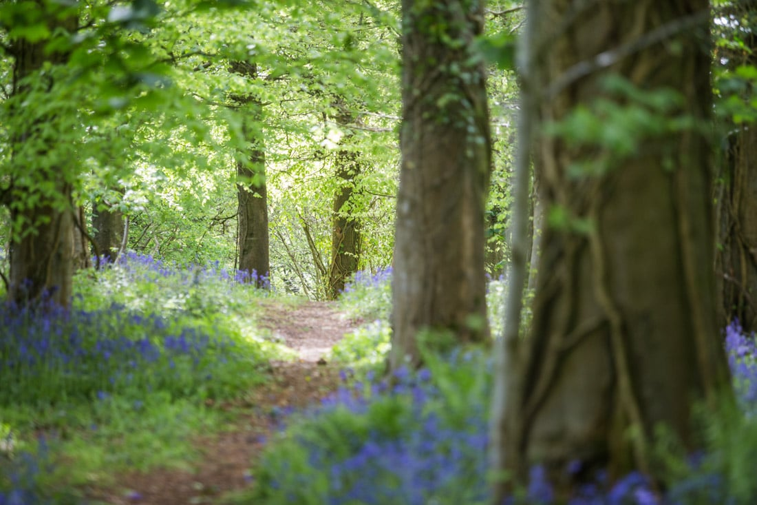 Bluebell Wood Photo Shoot