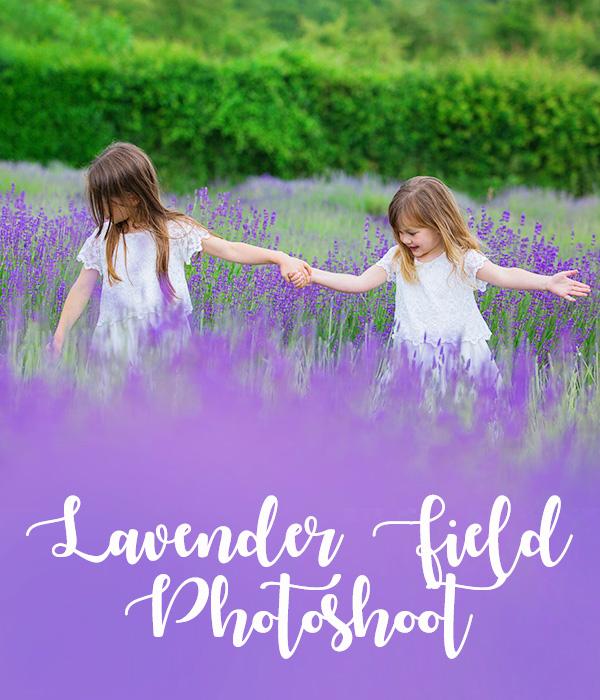 lavender photoshoot mh