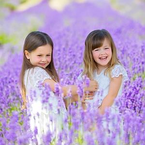 lavender photoshoot